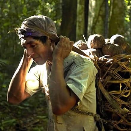 高级腕表品牌Piaget伯爵参与森林保护