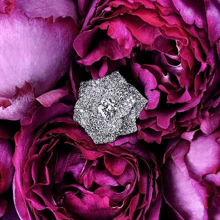 Piaget玫瑰珠宝